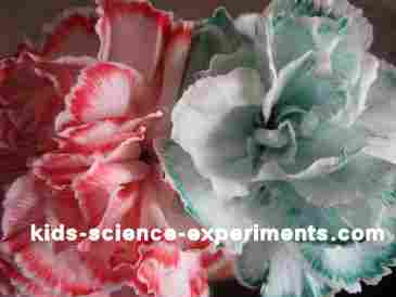 Kids Color Colour A Flower Science Experiments
